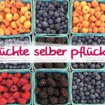 ドイツで味覚狩り、ベリー系フルーツや珍しい果物もあり