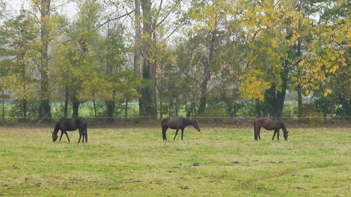 ドイツで馬と戯れる ドイツ国内の馬情報